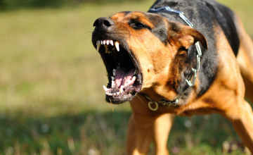 Preventing Dog Attacks While Outdoors